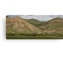 Herd Canvas Print