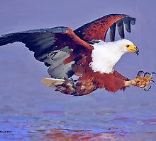 Eagle Strike by artstoreroom