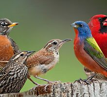 Songbird Summit by Bonnie T.  Barry