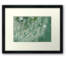 Dewdrops on Dandelion - 8 Framed Print