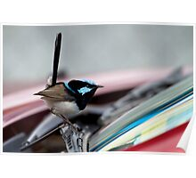 Superb Fairy Wren  (Malurus cyaneus) and my Car 2 Poster