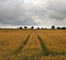 Country Field by Nick Jermy