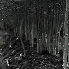 asparagus woods by Heike Nagel