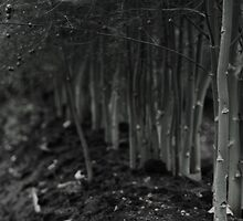 asparagus woods by Heike Nagel