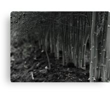 asparagus woods Canvas Print
