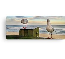 Feed The Birds Canvas Print