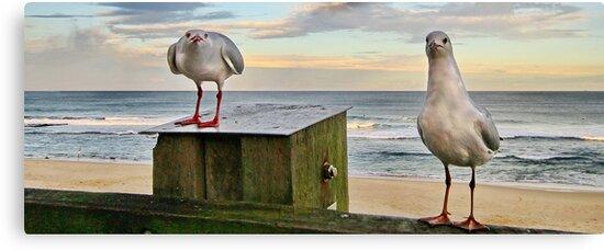Feed The Birds by Tainia Finlay