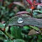 Droplet by Jamie Lee