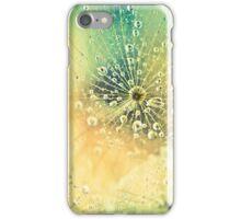 Dewdrops on Dandelion - 11 iPhone Case/Skin