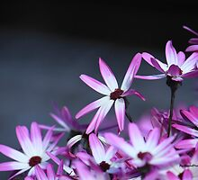 Pink flowers by sarchuk63