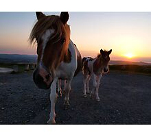 Dartmoor pony and foal. Photographic Print