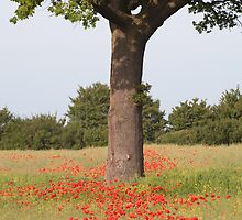 Poppies on Pillaidland by Christopher Cullen