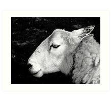 to dream of sheep - portrait of the elder Art Print