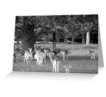 Richmond Park Deer Greeting Card