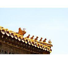 Dragon_family Photographic Print