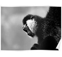 White Cheeked Gibbon Poster