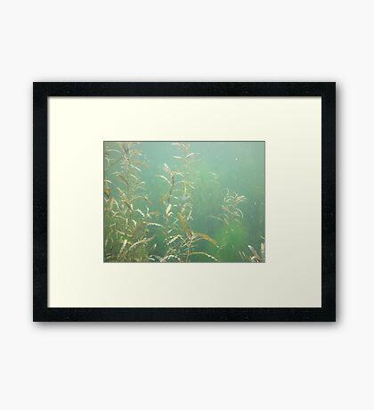 Descending Weed Basin Framed Print