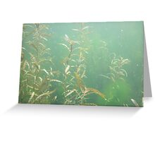 Descending Weed Basin Greeting Card