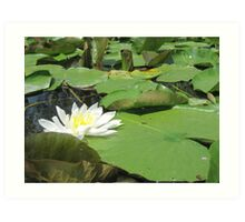 Green Lillies Art Print
