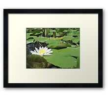 Green Lillies Framed Print