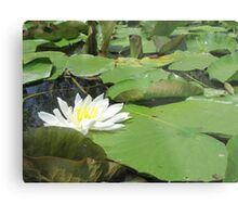 Green Lillies Metal Print