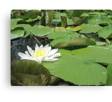 Green Lillies Canvas Print