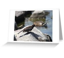 Posing Shore Bird Greeting Card
