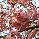 Cherry Blossom by JaxHunter