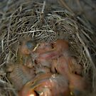 Baby Birds in a Nest by ManicMelody