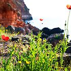 wild flower around the sea by plamenx