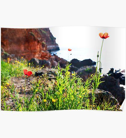 wild flower around the sea Poster
