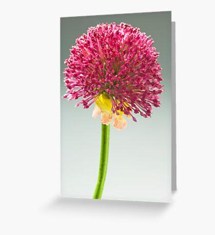 macro Greeting Card