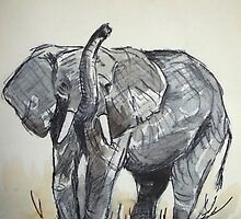 African Elephant sketch by Maree Clarkson