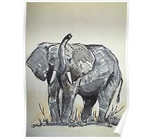 African Elephant sketch Poster