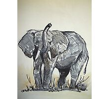 African Elephant sketch Photographic Print