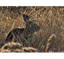 Hidden Hare Photographic Print