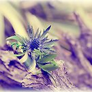 Vintage Thistle by lallymac