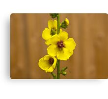 Dark Mullein flowers, Yellow Canvas Print
