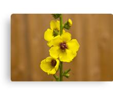 Dark Mullein flowers, Yellow Canvas Print