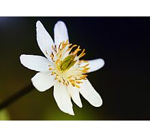 Mystery Blossom Photographic Print