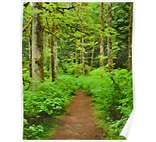 Simply Rainforest at Mike Lake Poster