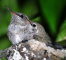 Two Baby Hummer by saseoche