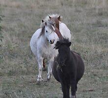 Ponies on the Run by fenwickstud