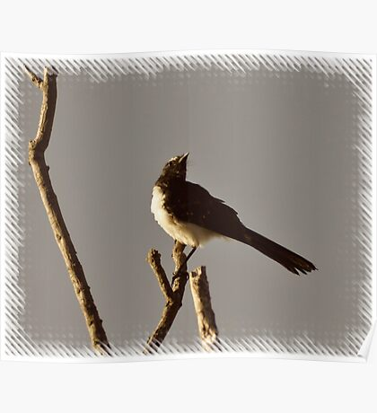 Willy Wagtail in sepia. Poster