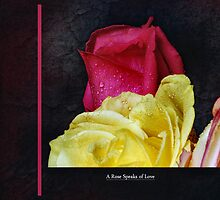 A Rose Speaks of Love by Elaine  Manley
