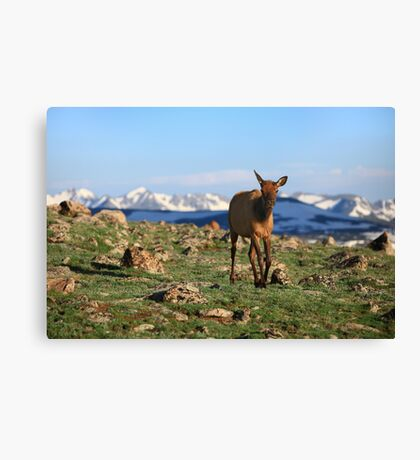 Rocky Mountains Morning  Canvas Print