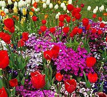 Spring by sfonativeboy