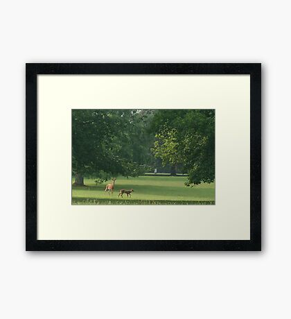 My dear deer 2 Framed Print
