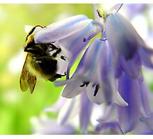A Carpenter In The Blue Bells...  Photographic Print