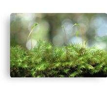 Moss Capsules Canvas Print